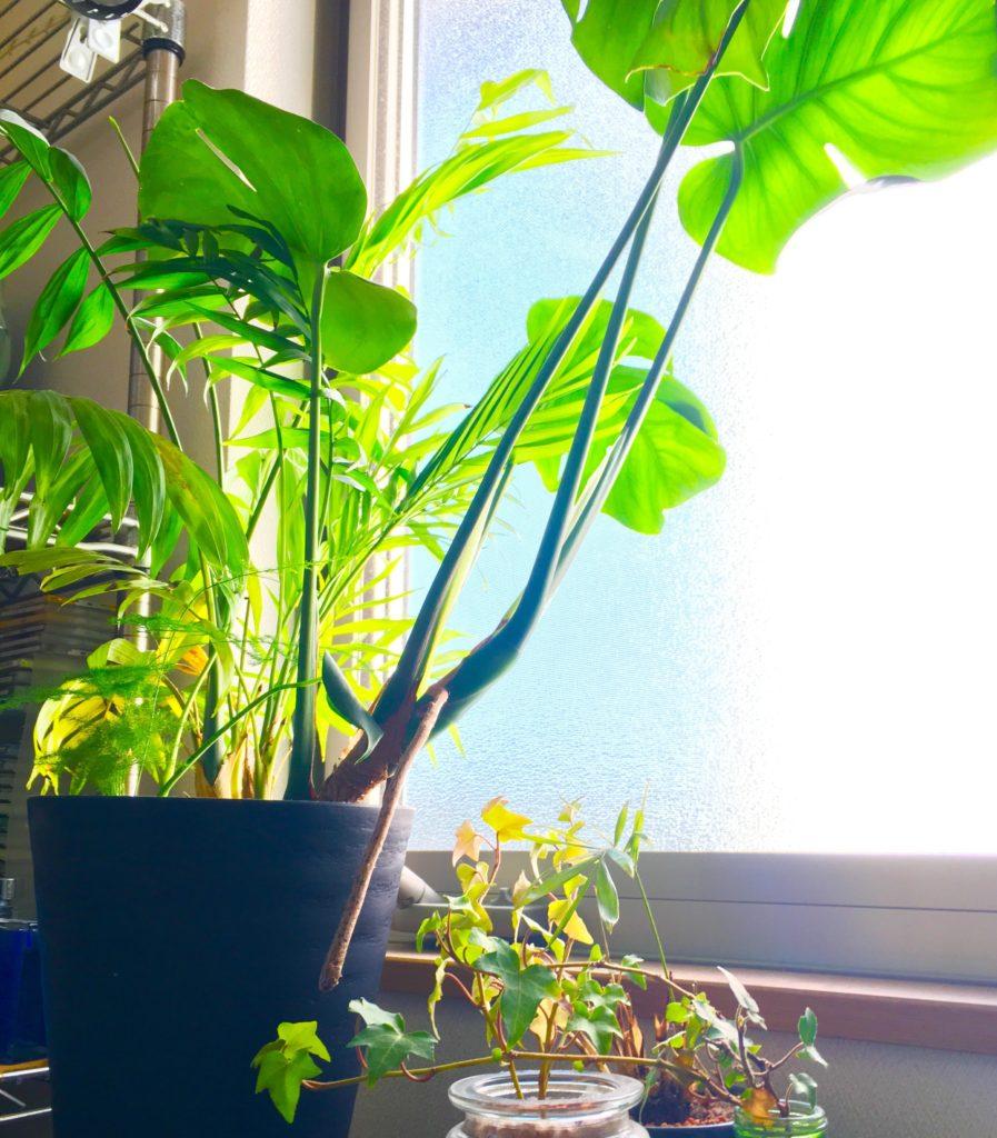 部屋の植物