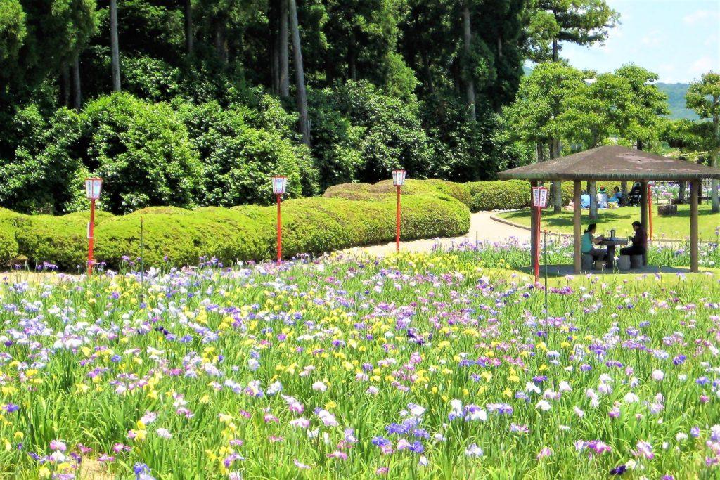 豊橋市の賀茂しょうぶ園